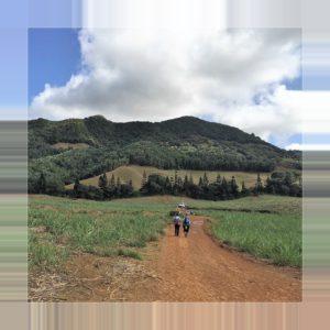 Mauritius - Wanderung durch Zuckerrohr
