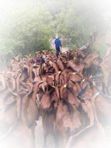 Goat Farm Taradeau_Provence